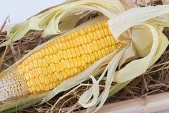 Słodka kukurudza na sianie Zdjęcie Royalty Free