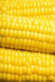 słodka kukurydza Obrazy Royalty Free