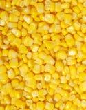 słodka kukurydza Zdjęcie Stock