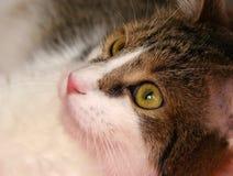 słodka zielona kotów oczu fotografia stock