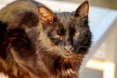Słodki czarny kot Fotografia Stock