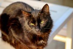 Słodki czarny kot Obraz Royalty Free