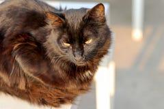 Słodki czarny kot Zdjęcia Royalty Free
