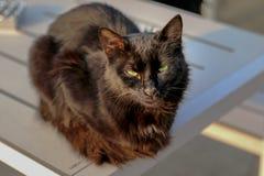 Słodki czarny kot Obrazy Stock