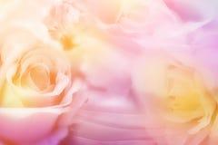 Słodki kolorowy kwiat w pastelowego koloru i plamy skutku jpg Zdjęcia Stock