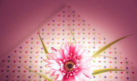 Słodki koloru gerbera Fotografia Royalty Free