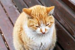 Słodki kot Obraz Royalty Free