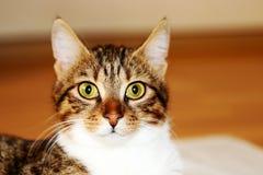 Słodki kot Zdjęcia Stock