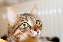 Słodki kot Fotografia Royalty Free