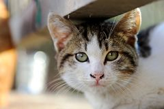 Słodki kot Zdjęcie Royalty Free