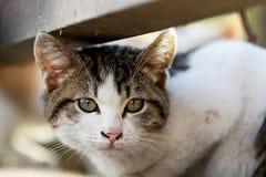 Słodki kot Zdjęcie Stock