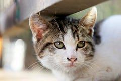 Słodki kot Obrazy Royalty Free