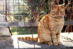 Słodki kot Fotografia Stock