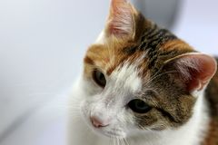 Słodki kot Zdjęcia Royalty Free