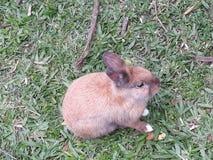 słodki królik obraz royalty free