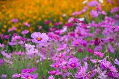 Słodki kwiat Fotografia Royalty Free