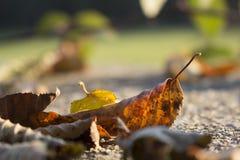 Słodki Listopad Zdjęcia Stock