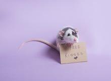 słodki szczura Fotografia Stock