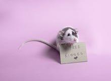 słodki szczura Obrazy Royalty Free