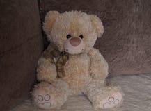 słodki teddy bear Zdjęcia Royalty Free