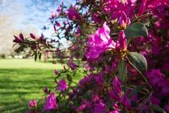Słodki wiosna czas obrazy royalty free