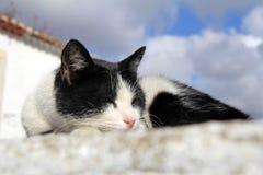 słodkie czarnego kota, white Zdjęcie Royalty Free