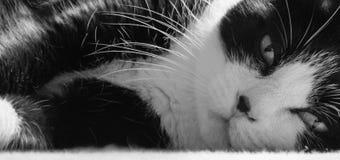 słodkie czarnego kota, white Fotografia Royalty Free
