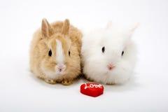 słodkie dziecko dwa króliki Fotografia Royalty Free