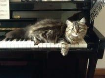 słodkie kota Obrazy Royalty Free