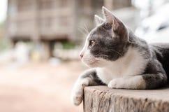słodkie kota Zdjęcia Stock