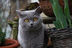 słodkie kota Obrazy Stock