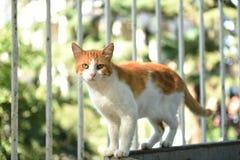 słodkie kota Fotografia Royalty Free