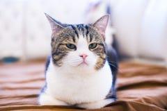 s?odkie kota zdjęcia royalty free