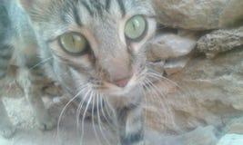 słodkie koty obrazy stock