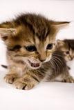 słodkie koty obraz stock