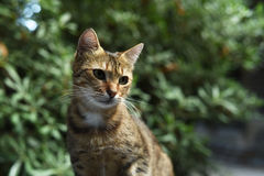 słodkie koty Zdjęcia Stock