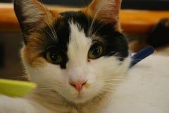 słodkie koty Zdjęcie Stock
