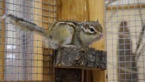 słodkie wiewiórka Obraz Stock
