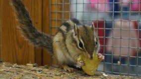 słodkie wiewiórka Zdjęcie Stock