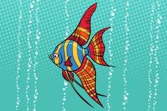 Słodkowodna angelfish akwarium ryba Zdjęcia Stock