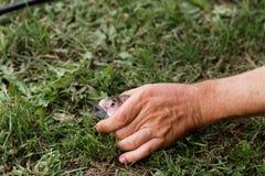 S?odkowodna ryba na zielonej trawie zdjęcia royalty free