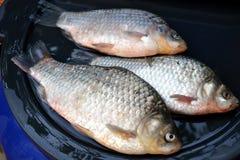 Słodkowodna ryba od Danube Obrazy Royalty Free
