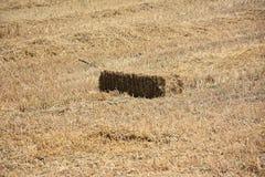 Słoma na polu w lecie Zdjęcie Stock