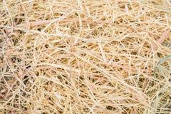 Słomiana trawa Fotografia Stock