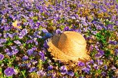 Słomiany kapelusz na polu purpurowi pansies z motylem Obrazy Royalty Free