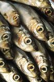 słone herring Zdjęcie Stock