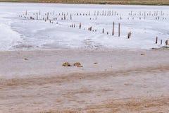 Słone jezioro Zdjęcia Royalty Free