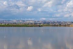 Słone jezioro z flamingami blisko Larnaka, Cypr Zdjęcie Stock