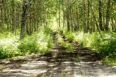 Słoneczna droga drewno w lecie Obraz Royalty Free