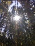 słoneczne dni Fotografia Stock